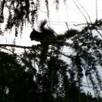Ono to fakt sedělo na stromě a chroupalo ořech :D